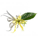 Extrait naturel d'Ylang Ylang