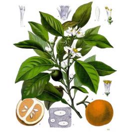 Extrait naturel d'Orange amère ou Bigarade