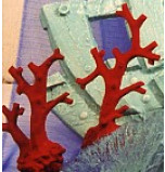 Corail Branche Deux Modèles