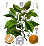 Extrait naturel de Fleurs d'Oranger ou Néroli