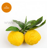 Natural Extract, Yuzu